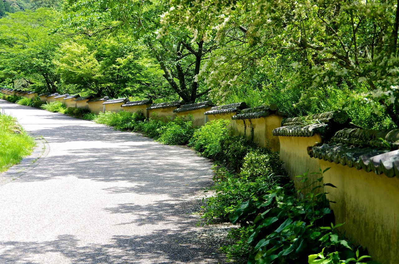 Grass Green Color Japan Mud Wall Plant Road Road Approaching A Shrine Scenics Shade Tiled Roof  Tranquil Scene Tranquility