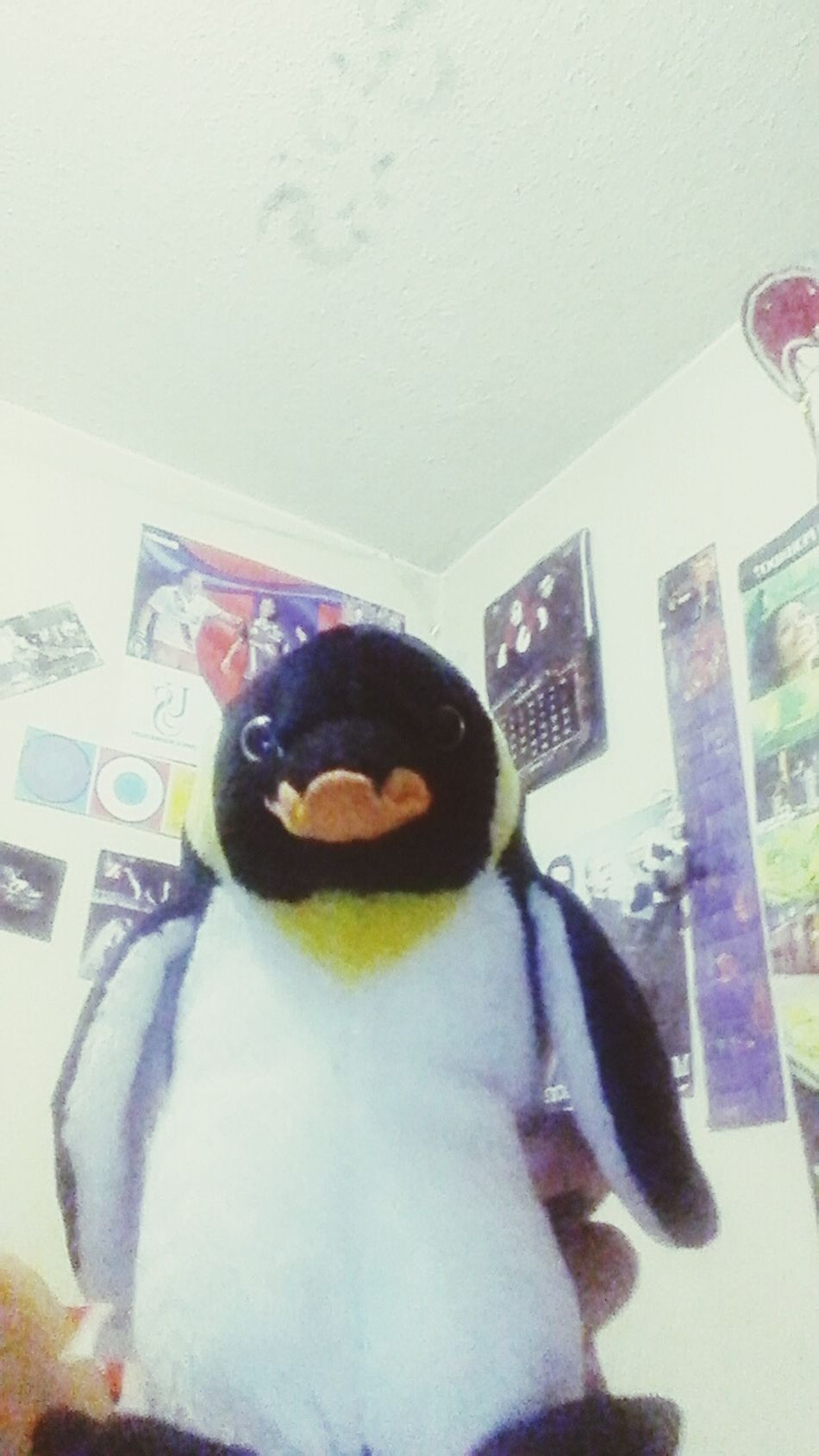 Penguin Checking In Night First Eyeem Photo