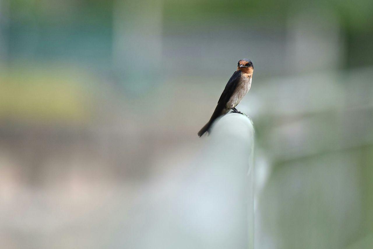 Beautiful stock photos of birds, Animal Themes, Bird, Day, Nature
