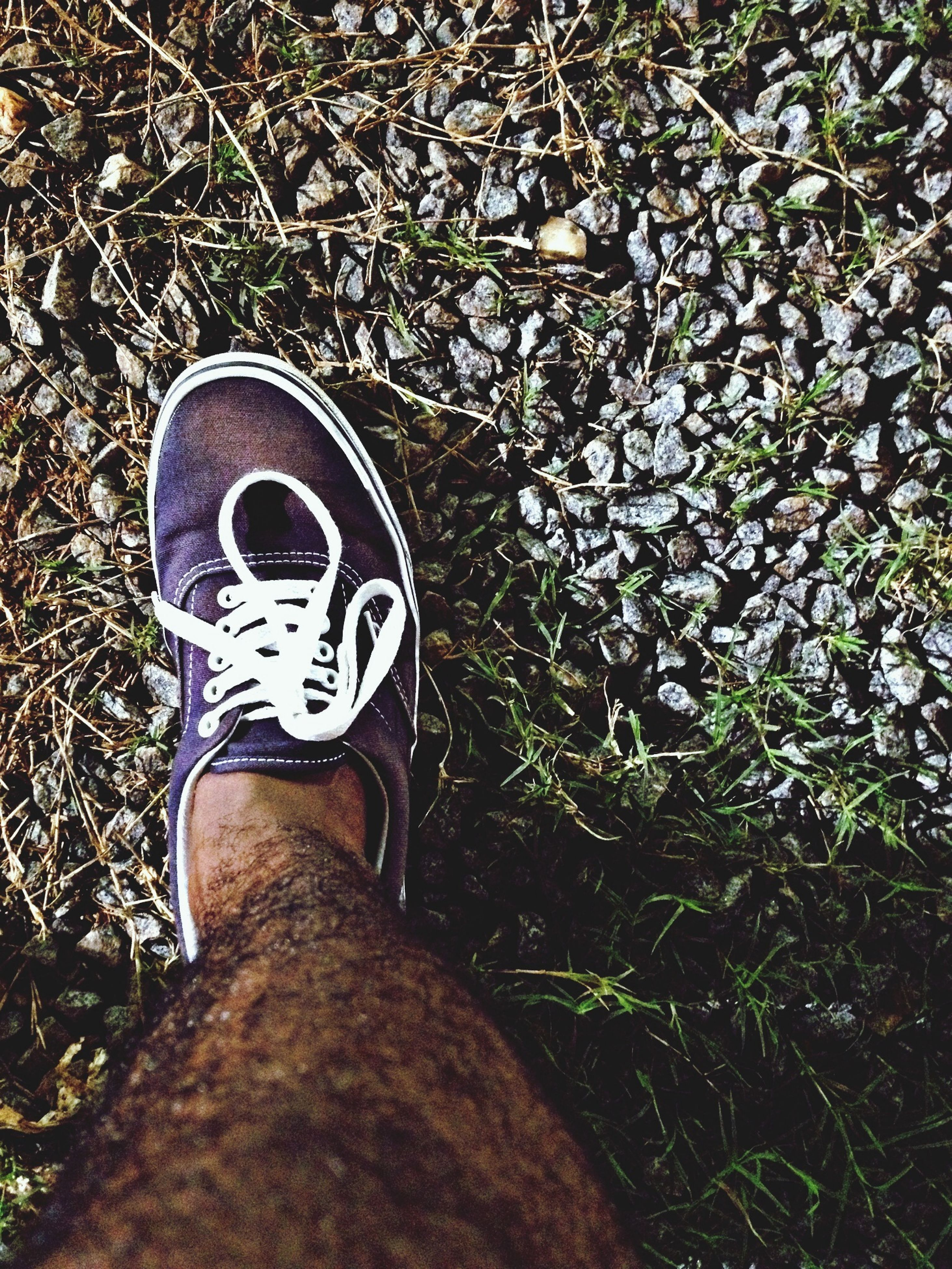 low section, shoe, person, personal perspective, footwear, grass, standing, high angle view, jeans, field, human foot, day, outdoors, canvas shoe, grassy, pair, close-up
