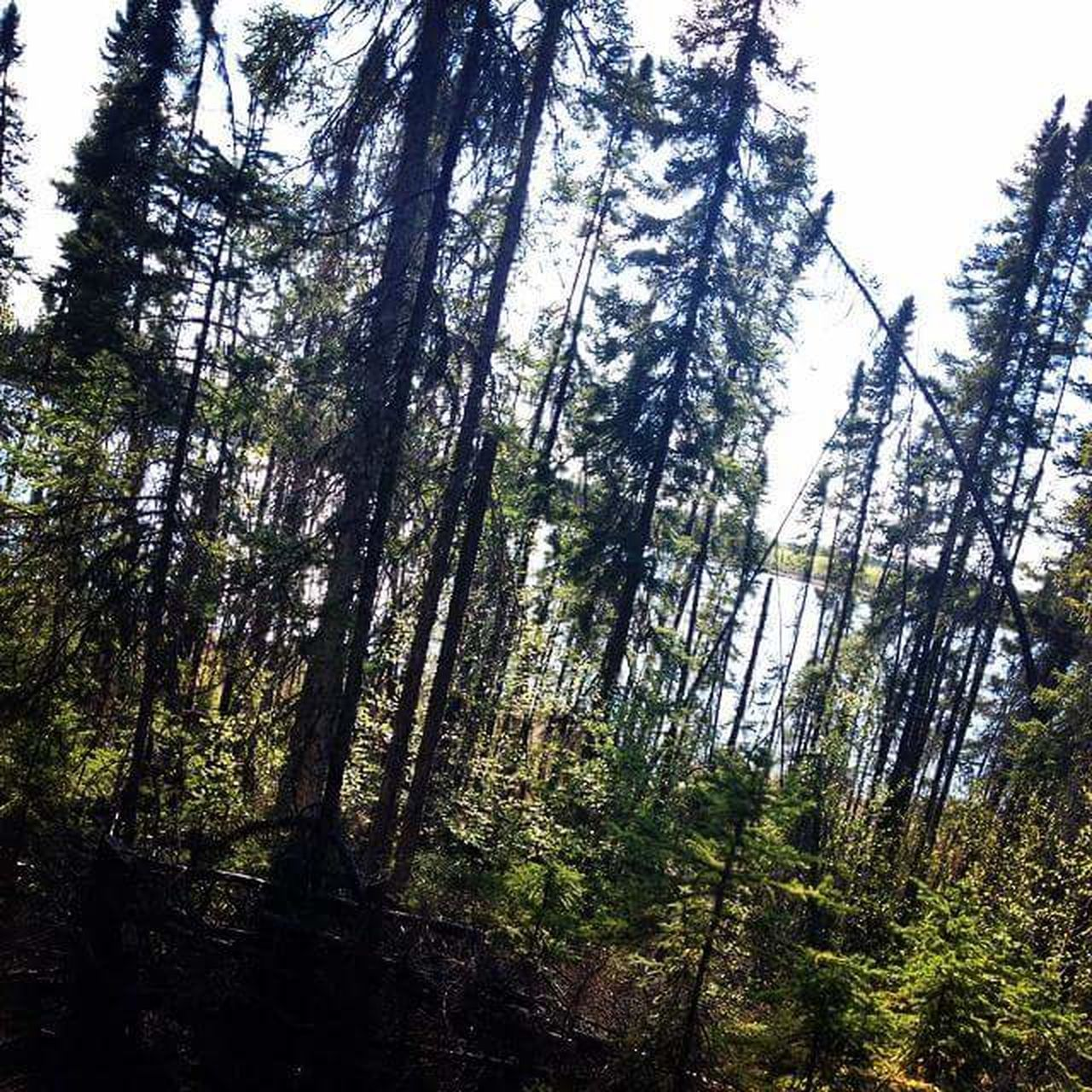 Hikingadventures Hiking Trees Forest Northern Manitoba IPhone 4S