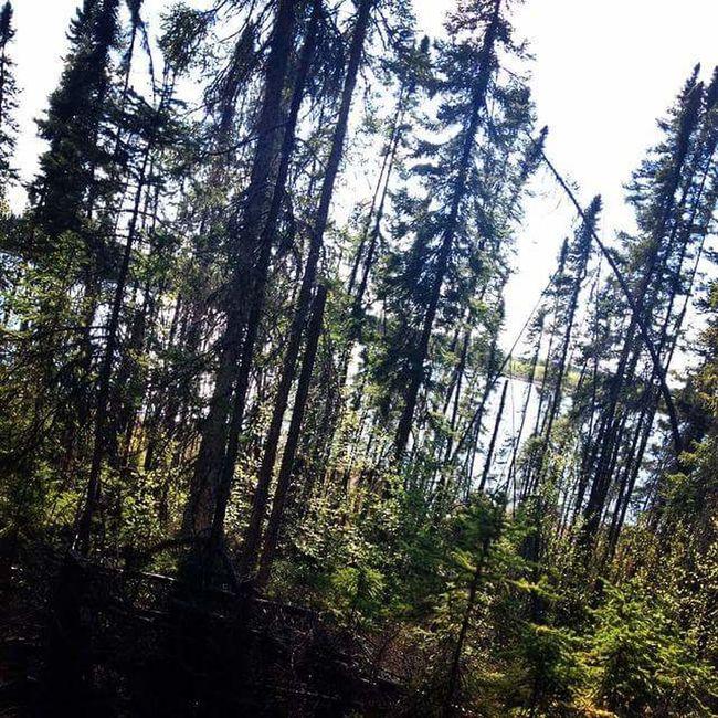 Hikingadventures Hiking Trees Forest Northern Manitoba IPhone 4S