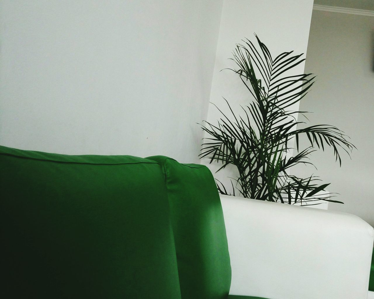 Green Color Indoors  Leaf Plant No People Palm Tree Close-up Herbal Medicine Tree Nature Growth Cultivated Day EyEmNewHere EyeEmNewHere Live For The Story