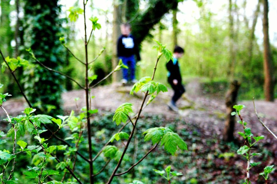 Forest Tree Nature People Outdoors Tree Trunk Day Lifestyles Branch Woods Trees Adventure