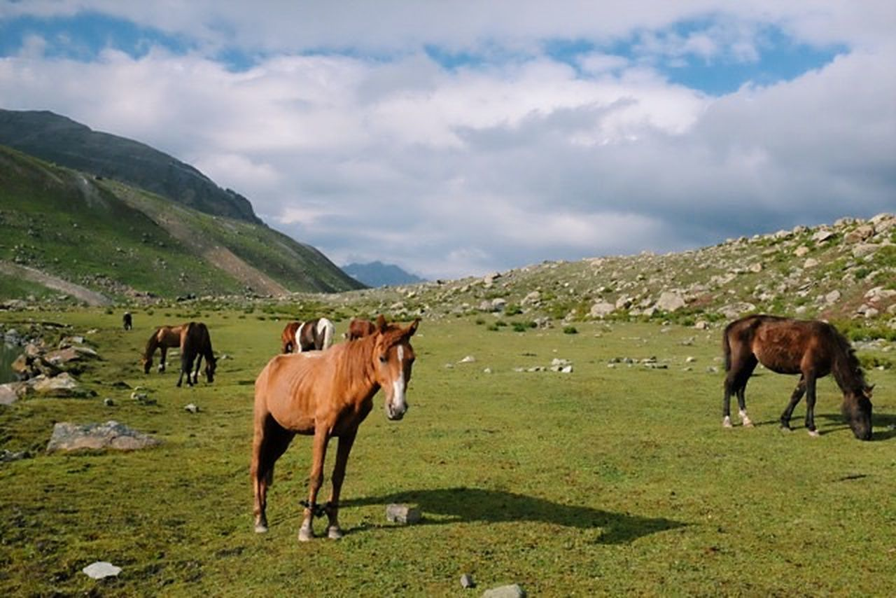 I Love Horses Trekking Kashmir India Clouds And Sky Mountains Meadow Holiday Traveling Landscape_Collection