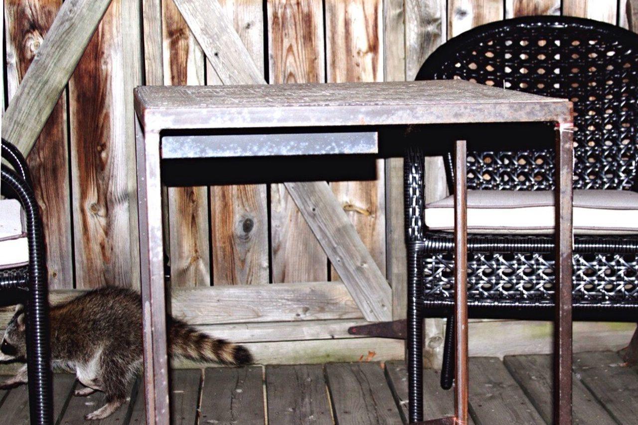 Beautiful stock photos of raccoon, Absence, Animal Themes, Chair, Empty