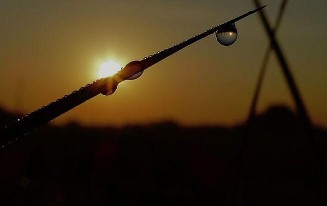 ...in a drop the whole world Beauty In Nature Close-up Drop Drops Eyeem Hungary Fragility Freshness Hungarian_photographers Macro Nature Nature Nature Photography Nature_collection Naturelovers No People Outdoors Silhouette Sun Sunlight Sunrise Sunshine Water