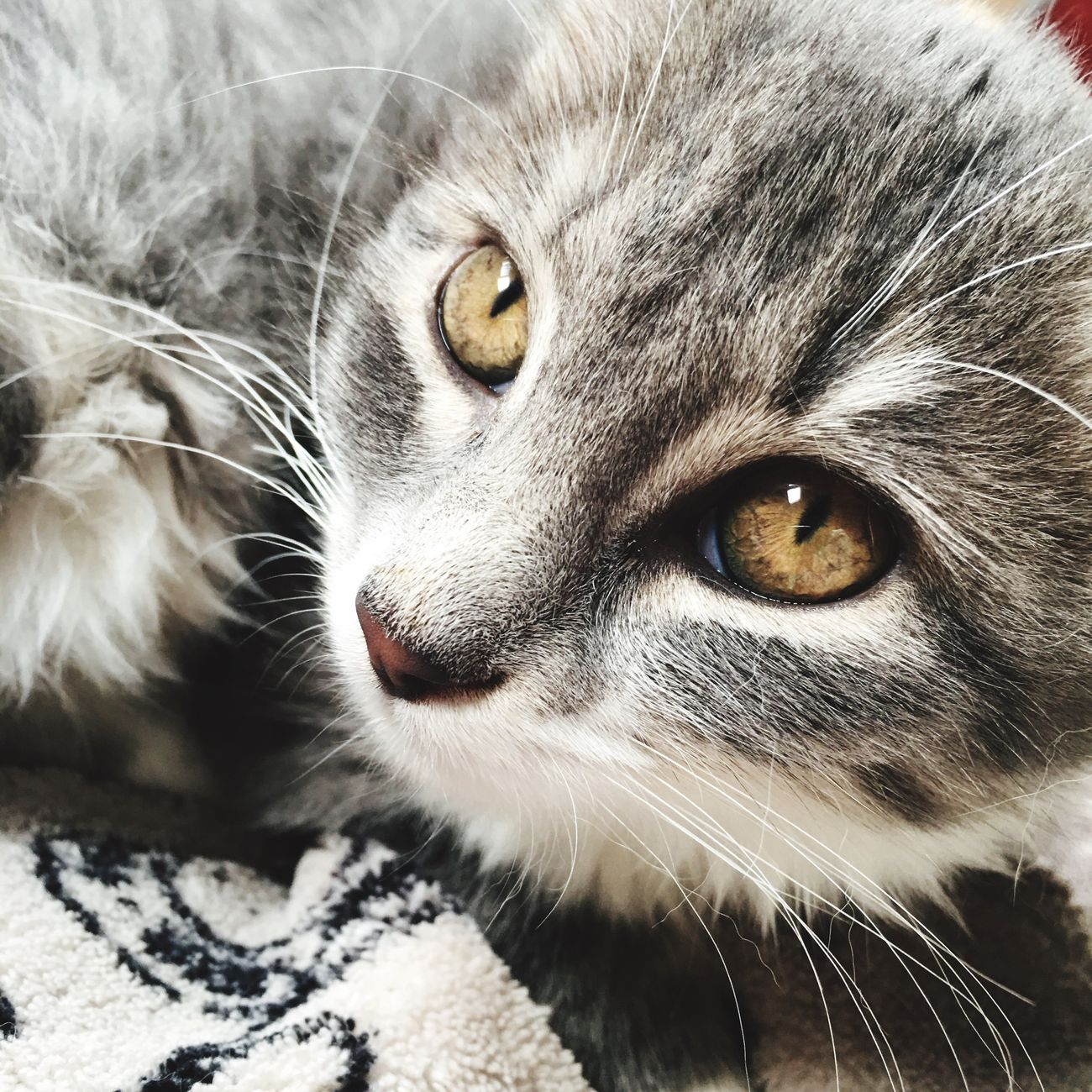 😻 Pets One Animal Animal Themes Feline Cat Babycat Chaton Chat Cute Love Cats Of EyeEm Cute Cats Mycat Chats Cute Pets Animal Cats