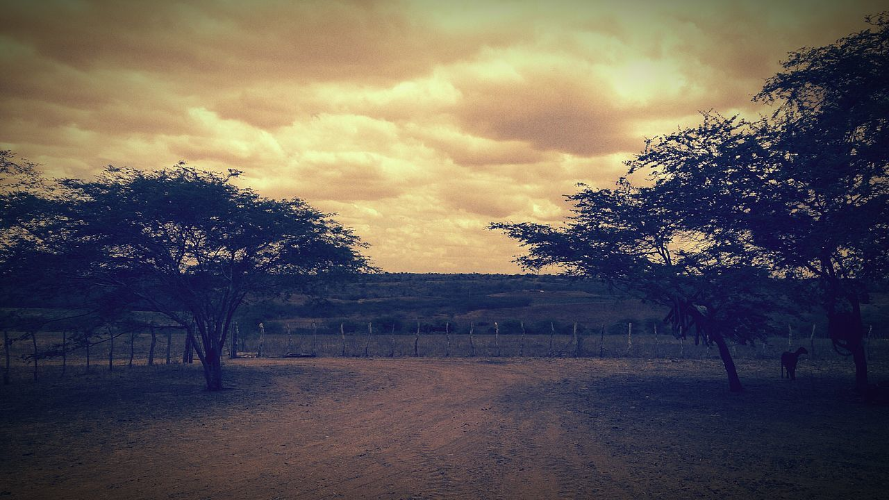 tree, nature, sky, tranquility, beauty in nature, landscape, scenics, tranquil scene, cloud - sky, outdoors, sunset, no people, day, bare tree