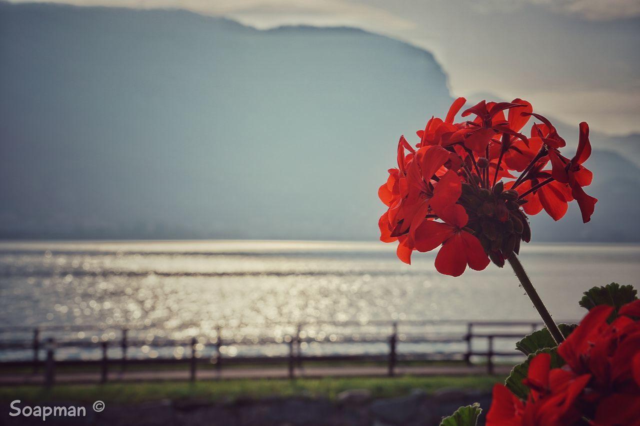 Flowers Verde Primavera Fiore Lago Di Como Lombardia Lago Di Garlate Lago Di Garlate,italy Fiori Sun Montagne Lake Italy Sony A6000 Flower Lecco Italy❤️ Natura Lago Di Como, Italy