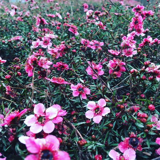 Spring California California Love Pleasure Point Santa Cruz Flowers Purple