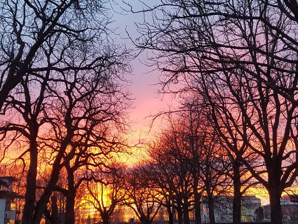 Fire... Sunset Nature Sky Beauty In Nature Tree Silhouette Outdoors Romantic Sky Photoart Photoshoot Picoftheday Sweden Karlstad Nature Skyisonfire Firesky Mobilephotography