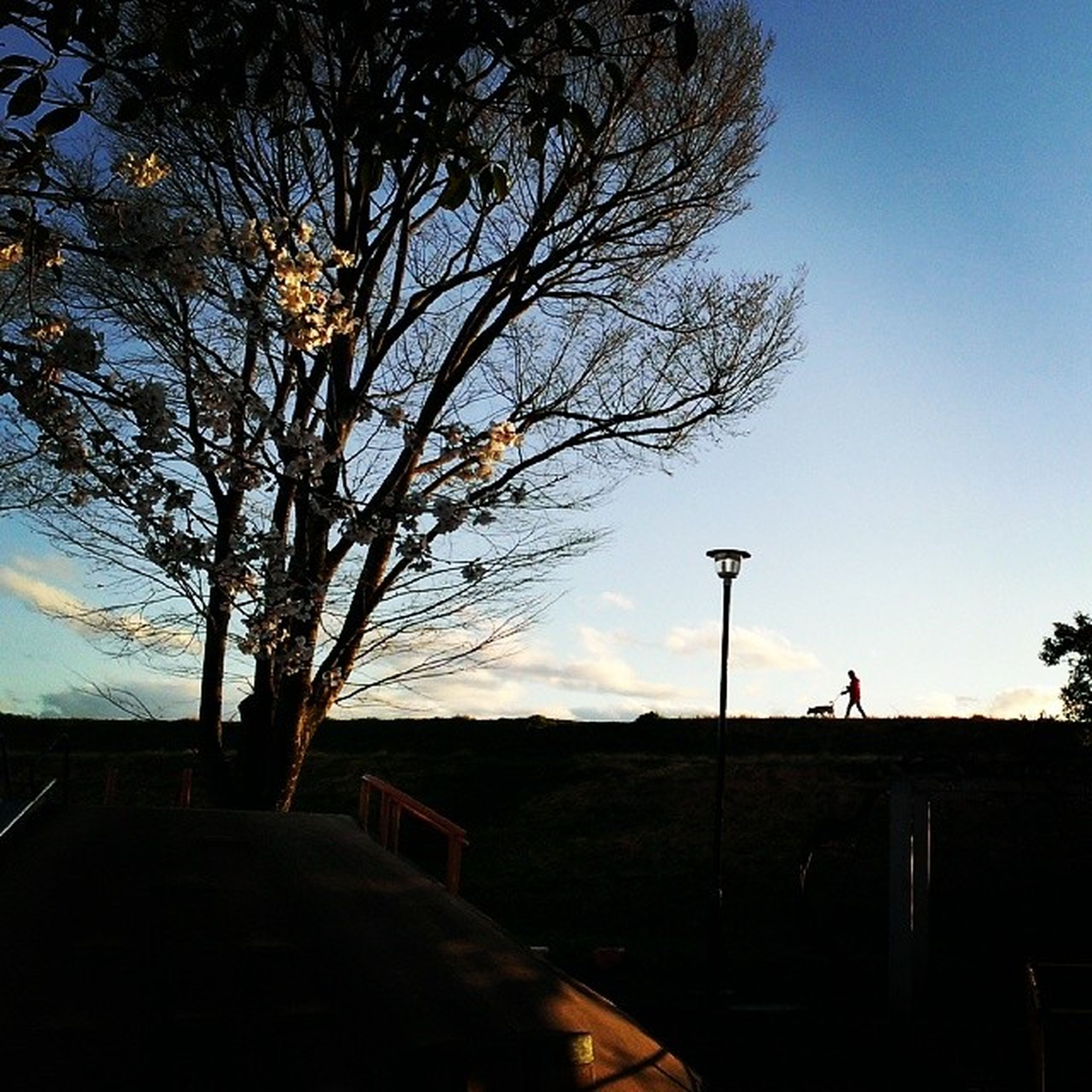 tree, silhouette, sky, bare tree, branch, built structure, street light, building exterior, sunset, clear sky, architecture, road, nature, tranquility, dusk, outdoors, tranquil scene, no people, house, beauty in nature