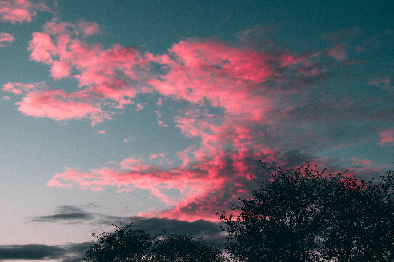 tree, sky, beauty in nature, nature, low angle view, cloud - sky, scenics, tranquility, tranquil scene, silhouette, no people, outdoors, growth, sunset, day