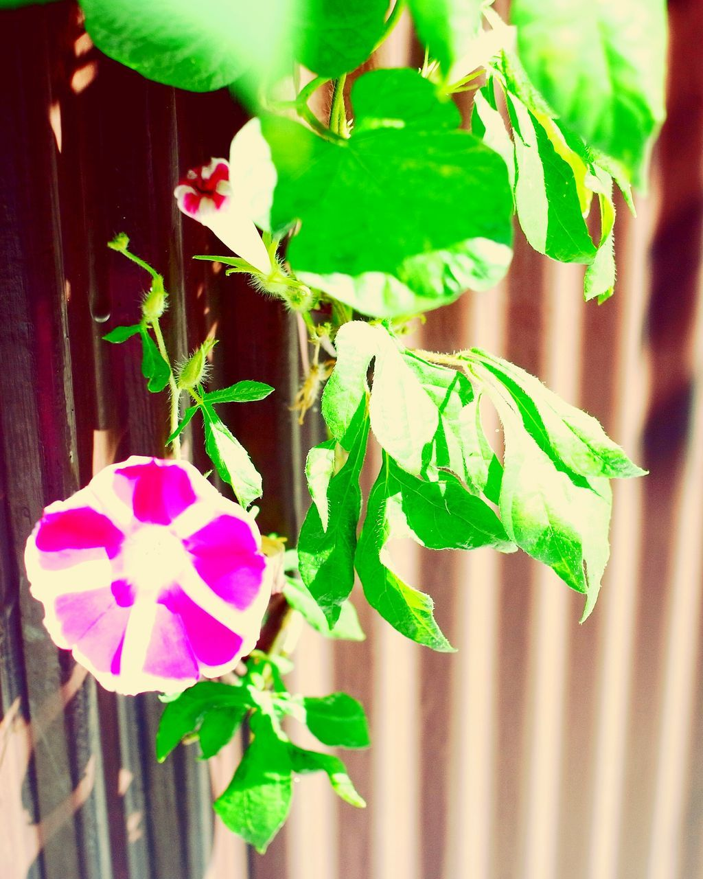 growth, plant, green color, leaf, fragility, no people, nature, day, freshness, flower, close-up, outdoors, beauty in nature, flower head