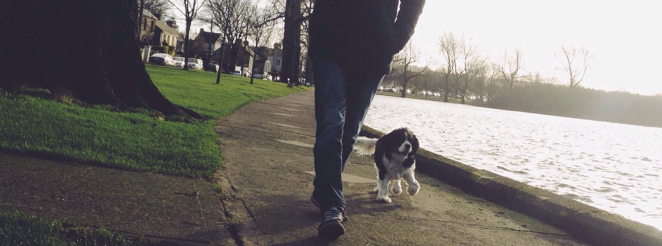 Walk proudly Street Photography Vscocam IPhoneography Ireland🍀 Dogs Dog Walking Lakeside Lough