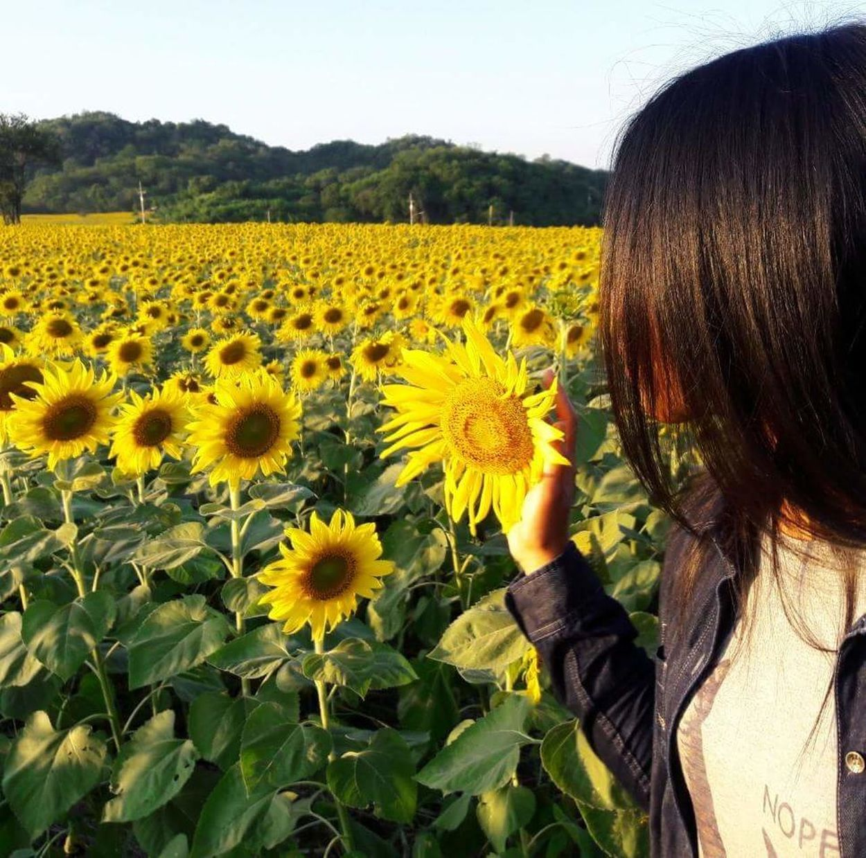 Flower Beauty In Nature Outdoors Yellow Sky People Women Sunflower