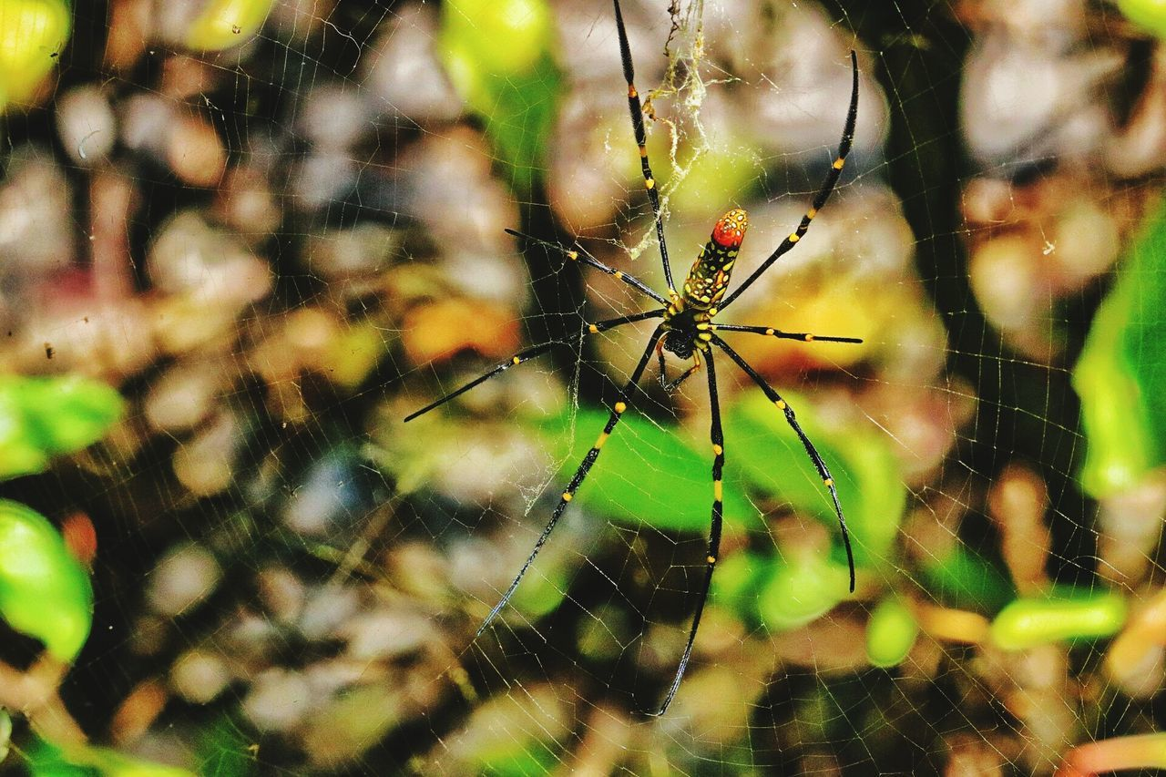 Spider Web Nature Animal Themes Spider Insect One Animal Animals In The Wild Focus On Foreground Close-up Fragility Beauty In Nature Outdoors Day Animal Wildlife Web No People Plant Survival Animal Leg
