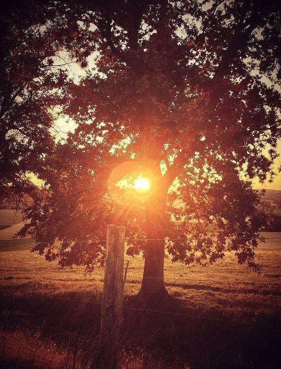 Nature_collection EyeEm Best Shots TreePorn Sun_collection
