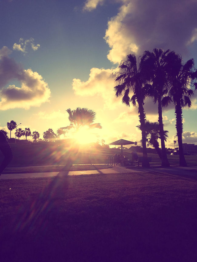 Beautiful Palm Trees in front of an extraordinary sunset in Corpus Christi, TX Sunset #sun #clouds #skylovers #sky #nature #beautifulinnature #naturalbeauty #photography #landscape Palm Trees Corpus Christi, Tx First Eyeem Photo