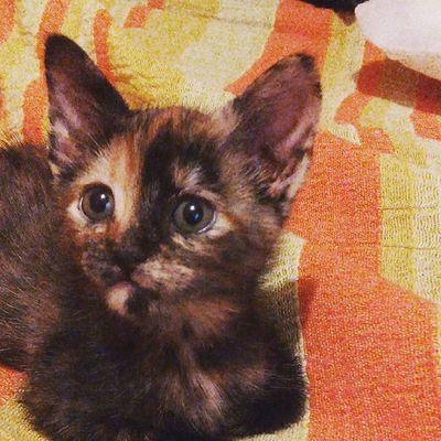 La integrante nueva de la familia!! Catlover ,Nuevaintegrantedelafamilia