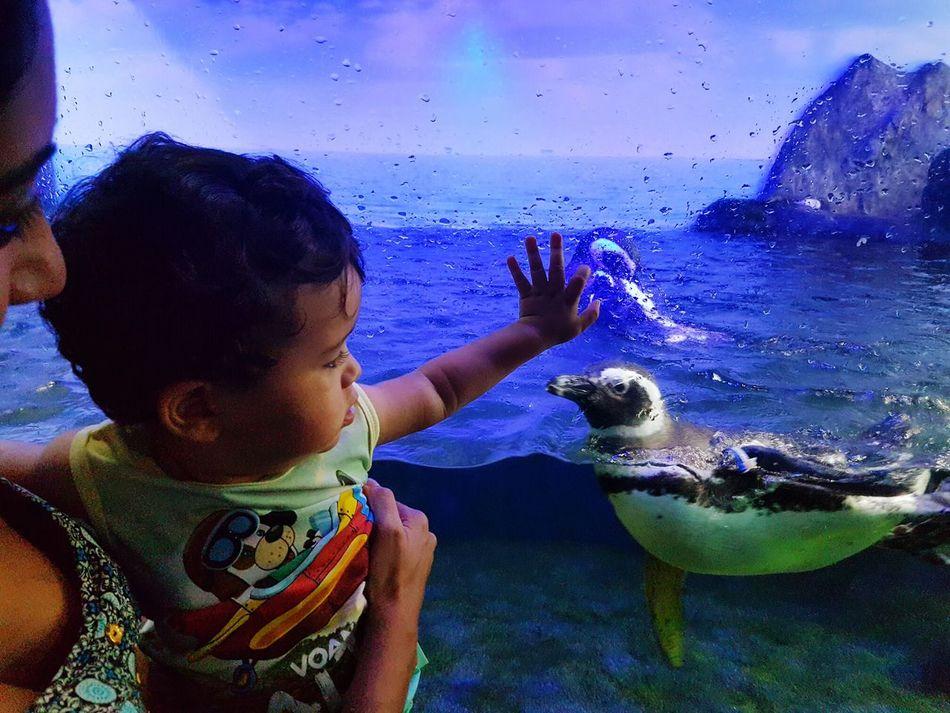 Finding New Frontiers Child Aquarium Water Sea Life Nature Underwater Ubatuba