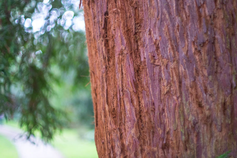 Bark Brown Close-up Day Focus On Foreground Growth Natural Pattern Nature No People Outdoors Part Of Pattern Rough Selective Focus Textured  Tree Tree Trunk Weathered Wood Wood - Material