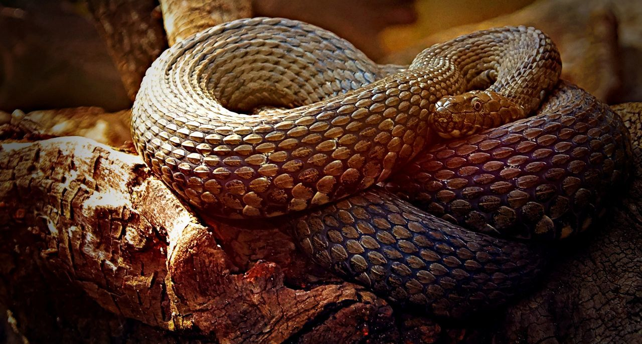 Schlange  Snake Close-up Details Tiere One Animal Animals Makro Makro Photography Tierfotografie Foto Fotografia Fotography Fotografie