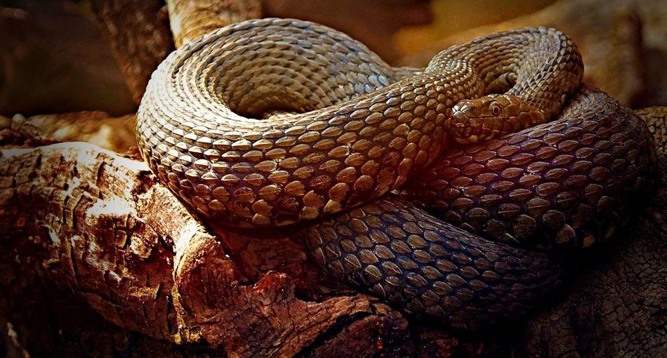 Schlange  Snake Close-up Details Tiere One Animal Animals Makro Makro Photography Foto Fotografia Fotography Fotografie Photo Photography Photooftheday Photographer First Eyeem Photo