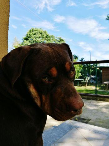 Goodmorning World  Skyblue Dog Danko Dogeyes HuaweiP9 Oo