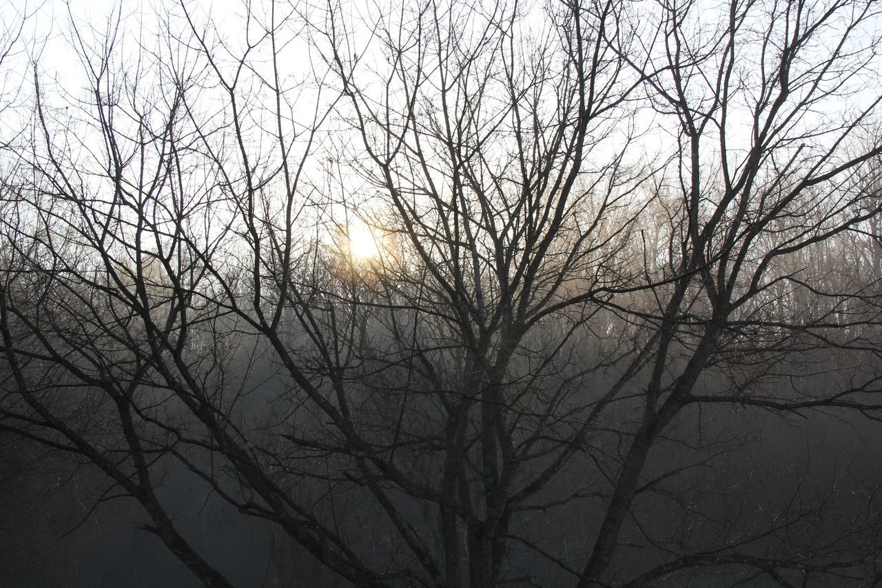 Backgrounds Bare Tree Beauty In Nature Branch Country Life Countryside Day EyeEm Nature Lover Graphic Design Nature Nature Photography Nature_collection Naturelovers No People Outdoor Photography Outdoors Pattern, Texture, Shape And Form Scenics Sky Solitude Sun Sunrise Tennessee Tranquility Tree