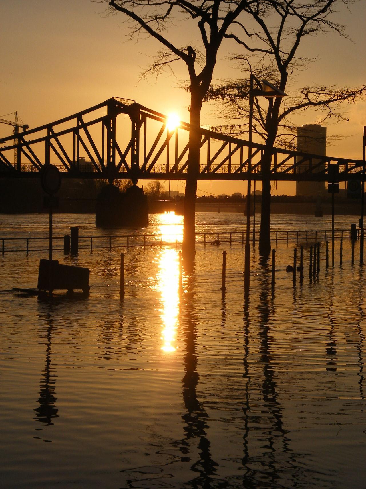 Eiserner Steg Evening Flooding River Golden Light Main Reflections Sunset Tress