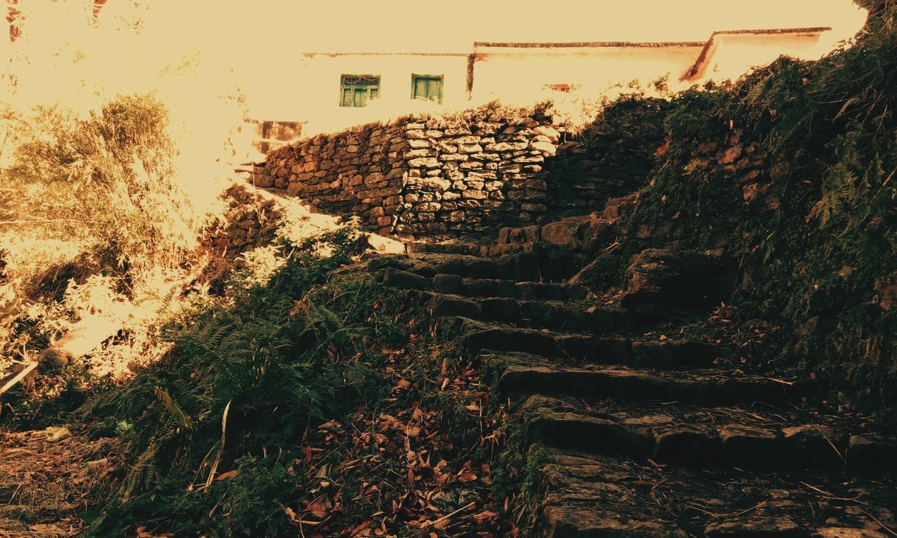 steps, steps and staircases, architecture, built structure, staircase, outdoors, plant, no people, building exterior, day, stairs, terraced field, nature, sky