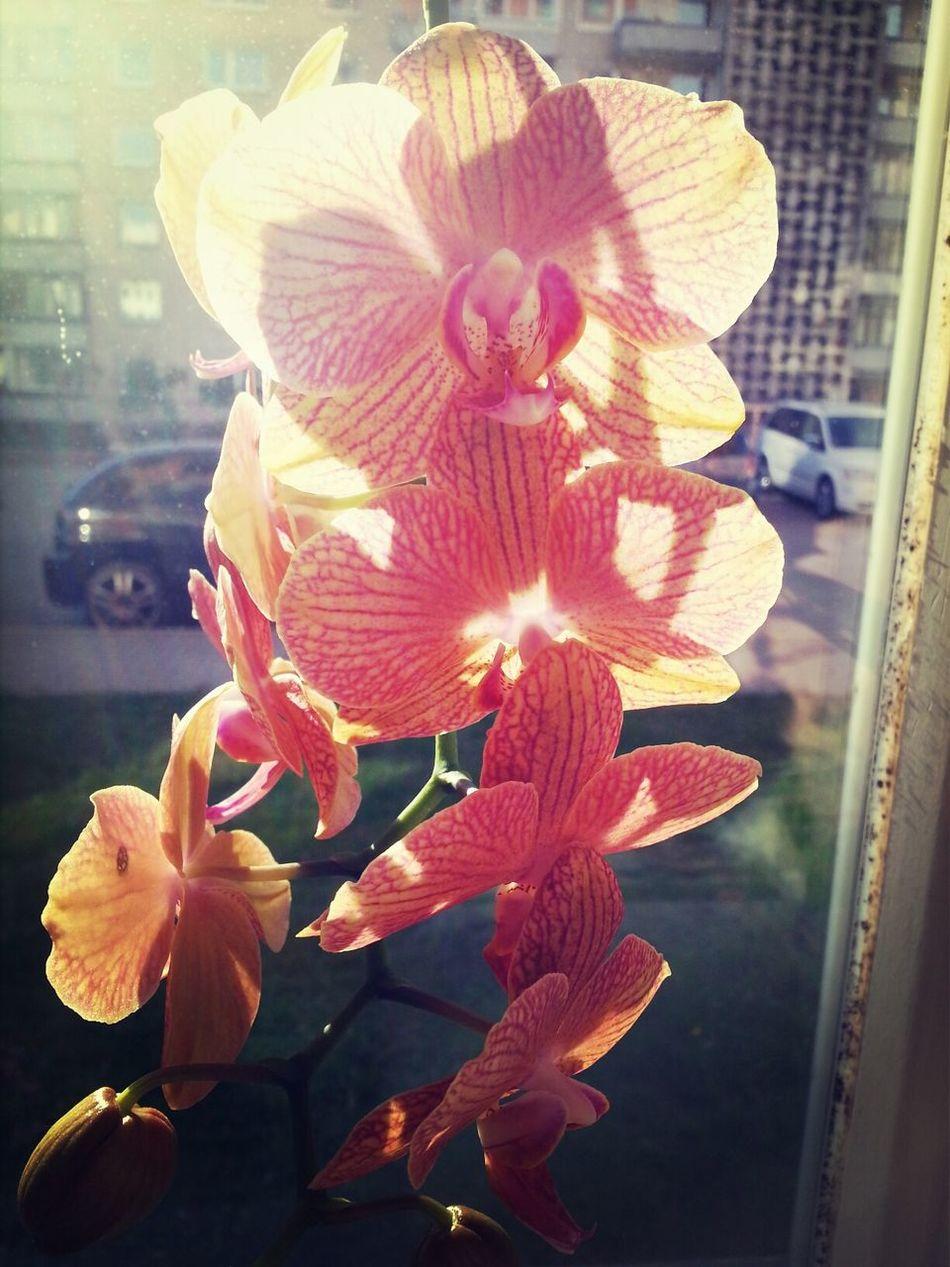 Orchids Sun Light Flower
