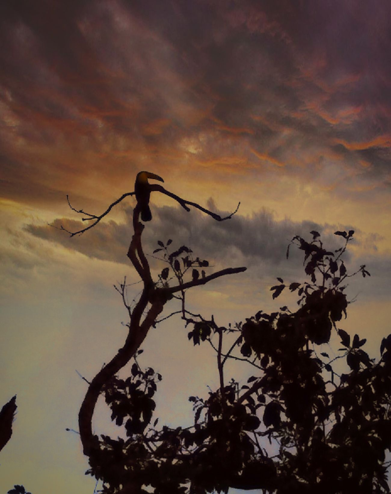 Nature Dramatic Sky Clouds Tucan