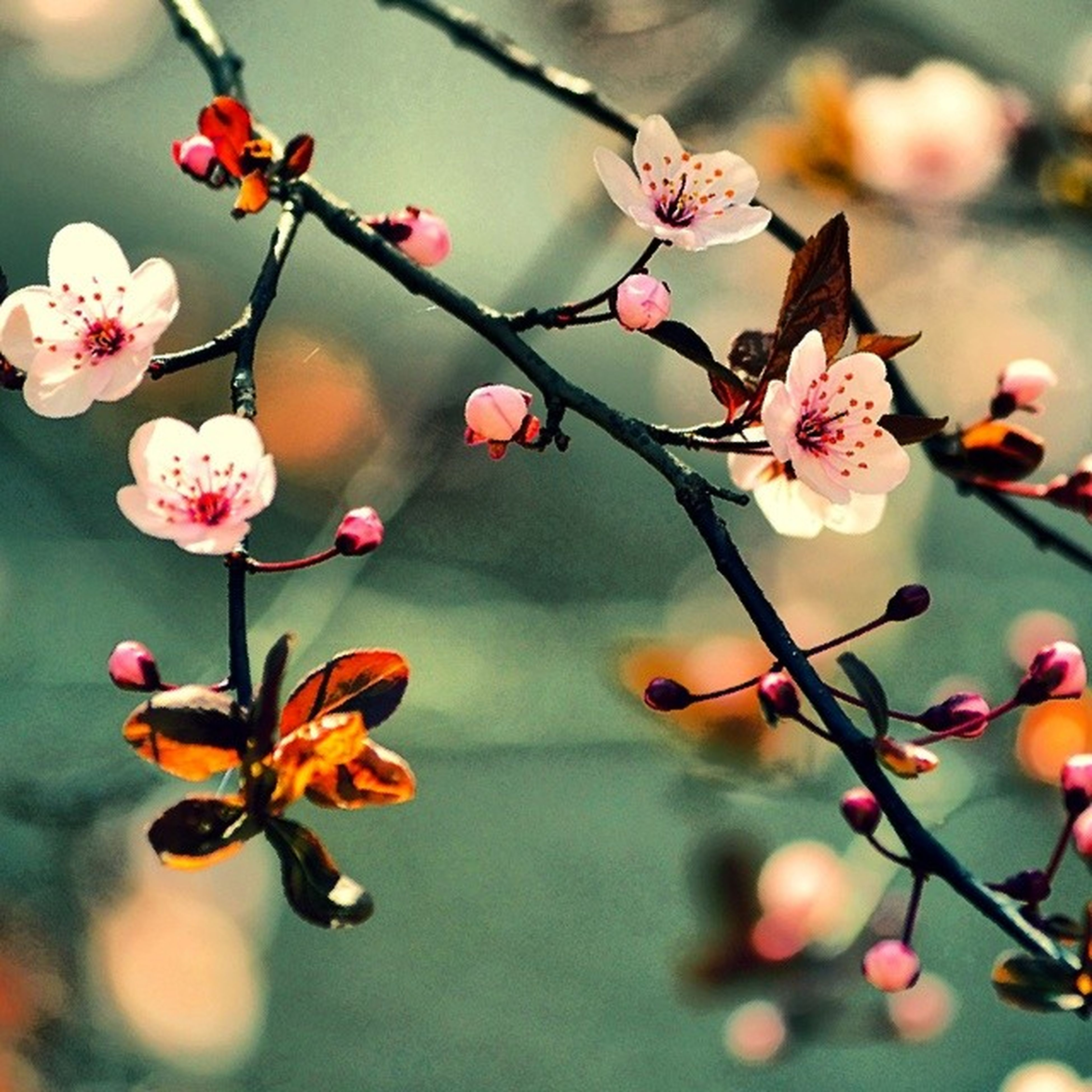branch, focus on foreground, twig, close-up, freshness, flower, growth, hanging, nature, fruit, bud, fragility, red, selective focus, tree, stem, beauty in nature, plant, day, berry fruit