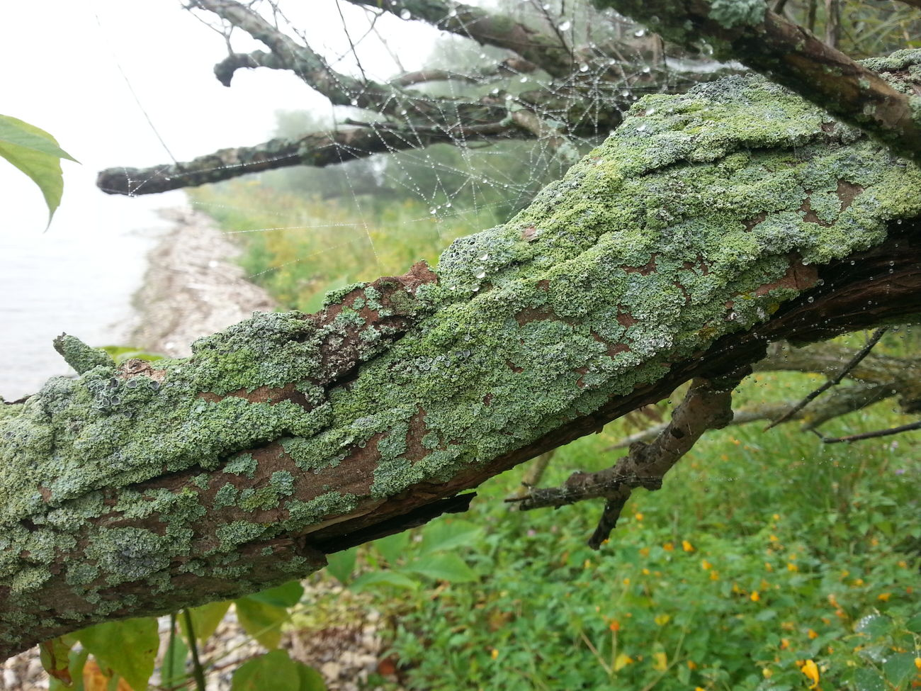Underdogs_nature Pure Nature Milwaukee Nature Eye Em Best Shots