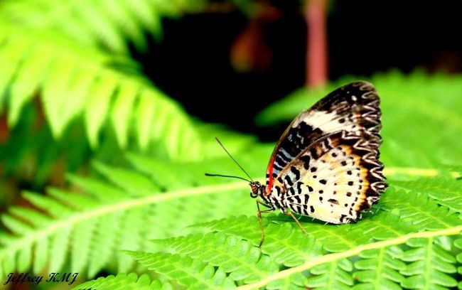 Butterflyfarm Penang Malaysia