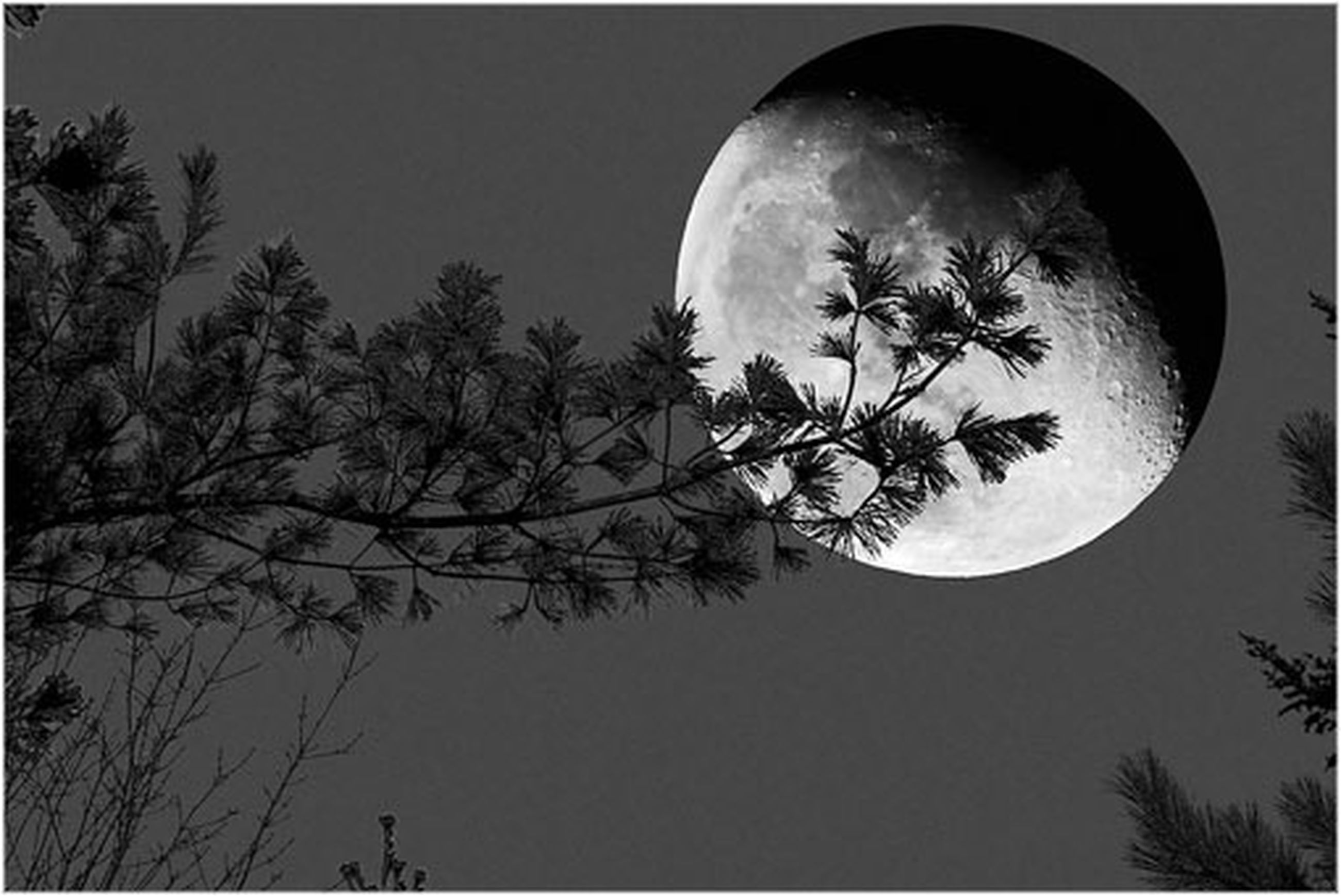 low angle view, tree, silhouette, sky, branch, bare tree, auto post production filter, transfer print, nature, night, dusk, clear sky, moon, beauty in nature, no people, outdoors, growth, bird, tranquility, copy space