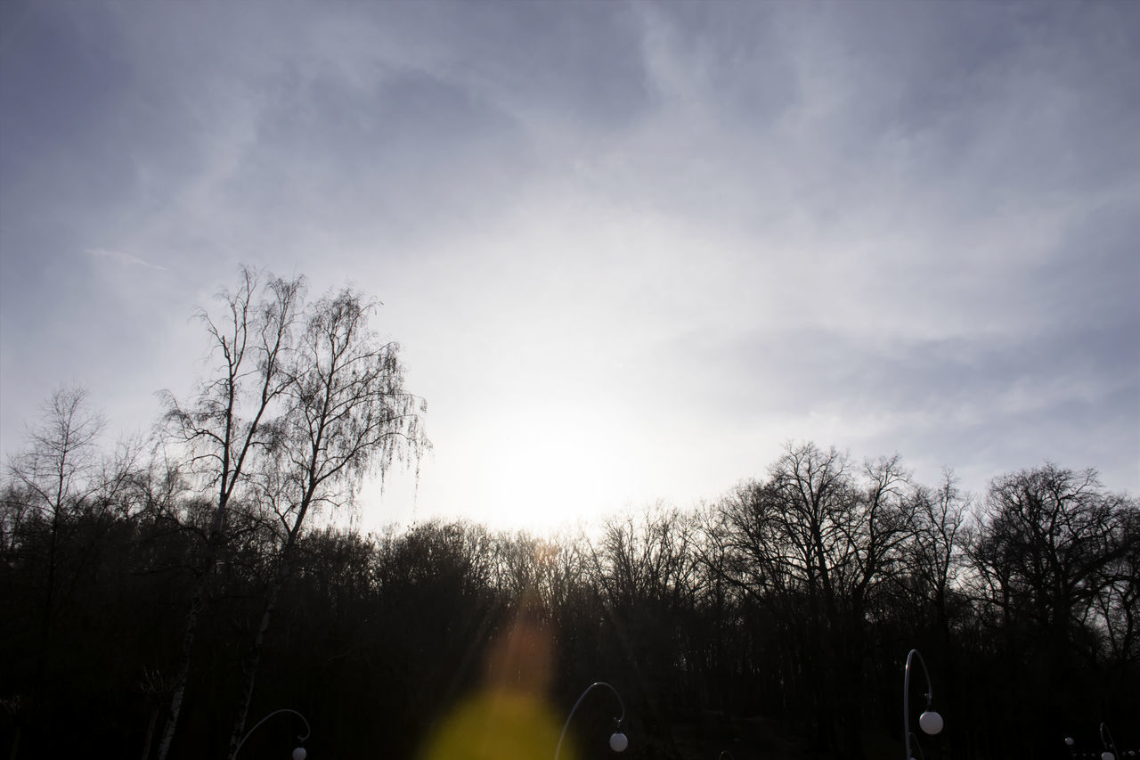 sky, tree, cloud - sky, nature, outdoors, tranquility, bare tree, day, no people, beauty in nature, low angle view, scenics