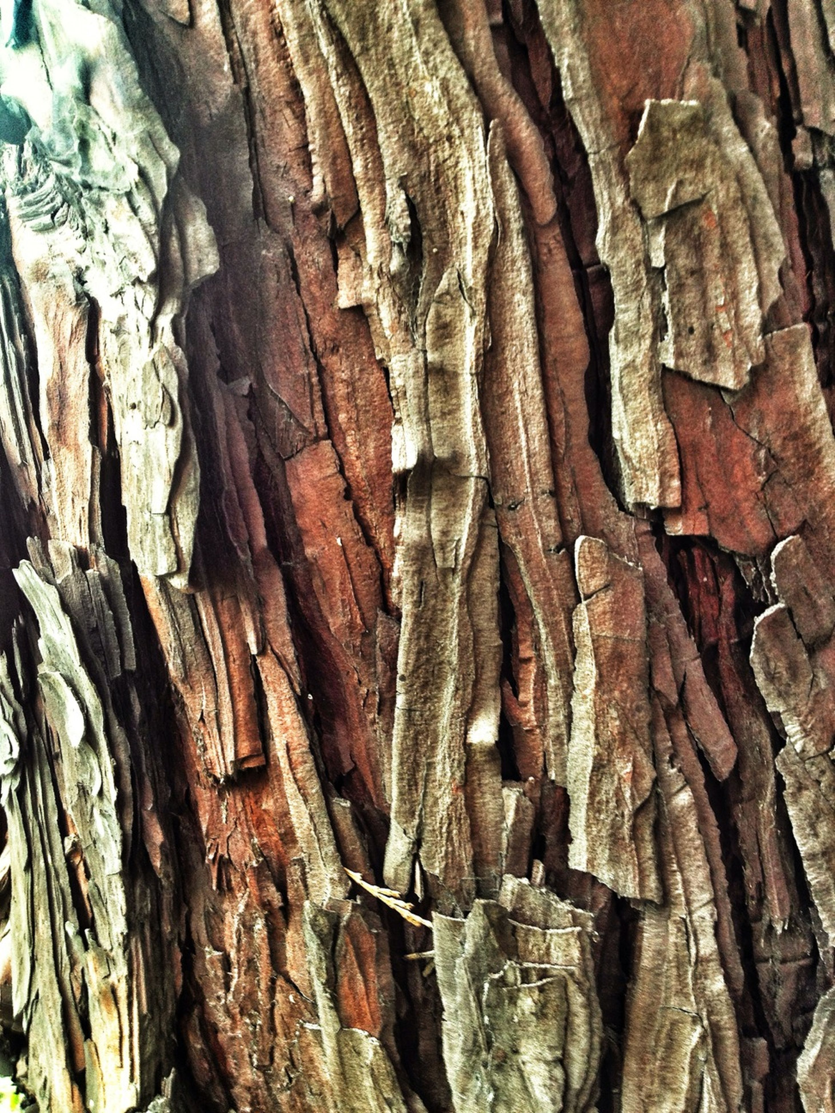 full frame, textured, tree trunk, backgrounds, tree, close-up, wood - material, growth, pattern, rough, nature, natural pattern, bark, outdoors, day, no people, abundance, detail, low angle view, root