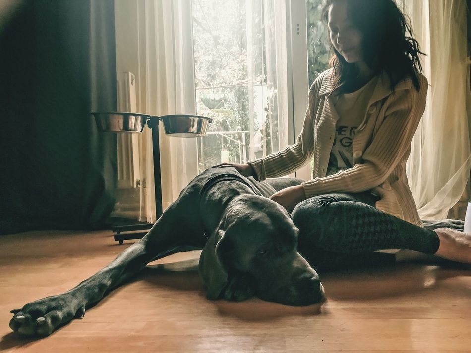 Beautiful stock photos of great dane, 25-29 Years, Animal Themes, Canine, Care