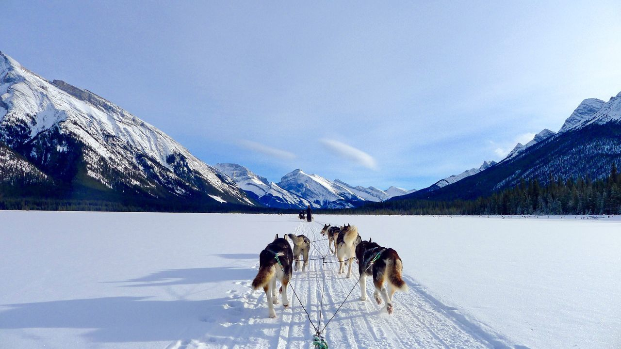Beautiful stock photos of tiere, snow, cold temperature, winter, animal themes