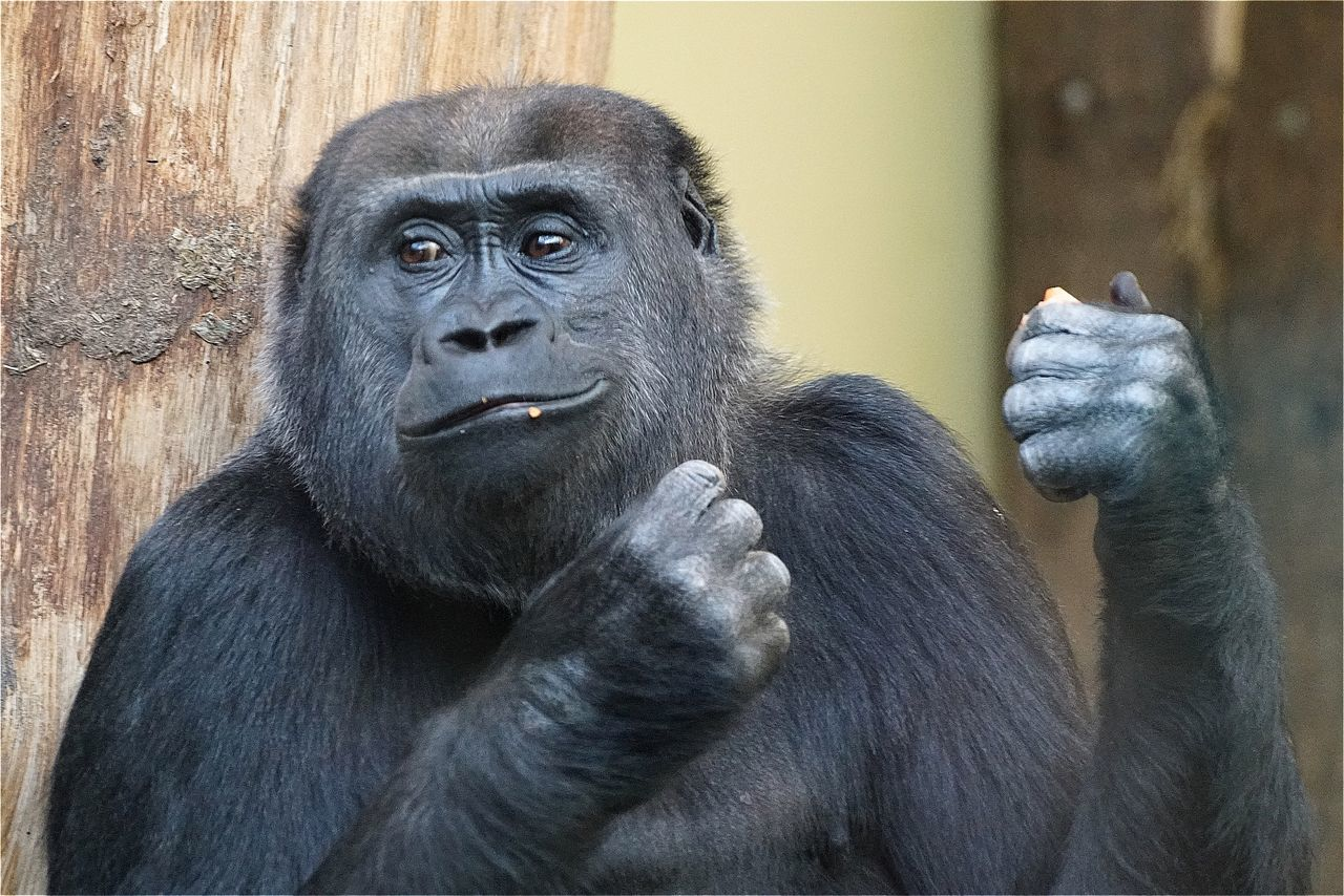 Monkey Zoo Zoo Berlin EyeEm Best Shots Animals EyeEm Masterclass AMPt_community Open Edit Tadaa Community