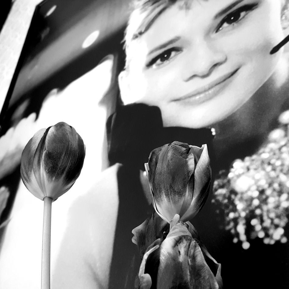 Daily Madness 026 - Audrey with Tulips Audrey Hepburn Black & White Black And White Black And White Photography Black&white Blackandwhite Blackandwhite Photography Blackandwhitephotography Bnw Bnw_collection Bnw_friday_eyeemchallenge Close-up Flower Fragility Freshness Headshot Indoors  Monochromatic Monochrome Monochrome Photography One Person Portrait Real People Smiling
