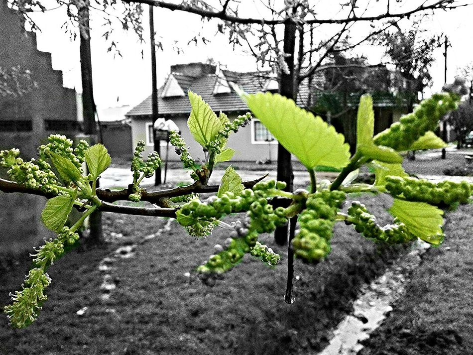 Beginnerphotographer Picture Cellphone Photography Nature Photography Black And White Photography Taking Photos Colour Colourpic Outside Photography Cellphone Camera Black & White Moment Photography Blackandwhite Begginer Photography Photo Begginer