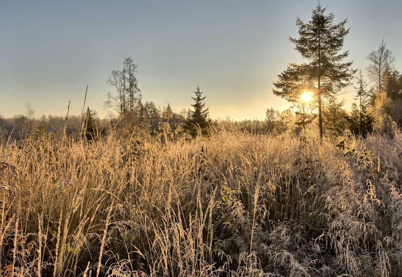 Background image with frozen straws on the meadow in winter. Cold Weather Frozen Frozen Nature Grass Landscape Meadow Meadowlands Nature No People Outdoors Rural Scene Sky Sunset Tree Winter Winter Wonderland Wintertime