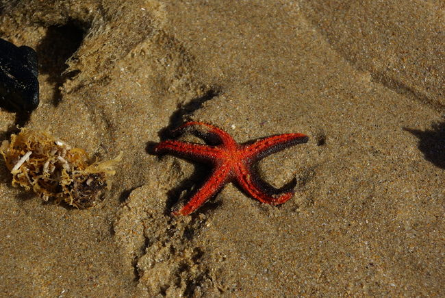 Beach Beauty In Nature Close-up Day Ground Lonely Lonely Objects Multi Colored Natural Pattern Nature No People Out Of Place  Outdoors Red Sea Sand Starfish