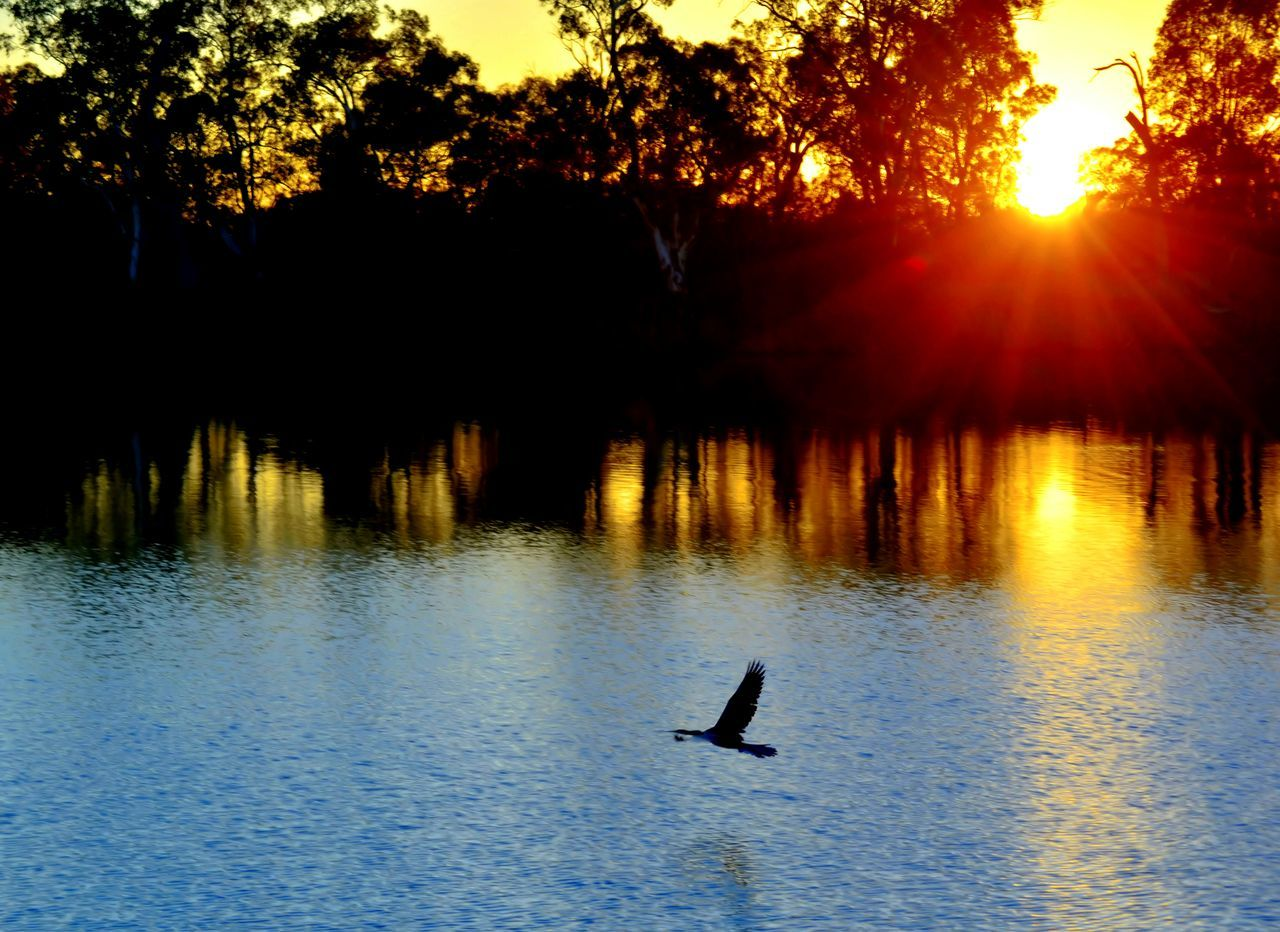 Urban 4 Filter EyeEm Best Shots - Sunsets + Sunrise Birds In Flight Peace And Quiet Check This Out EyeEm Nature Lover Taking Photos Photograph Anything Water_collection Nature On Your Doorstep from my front door
