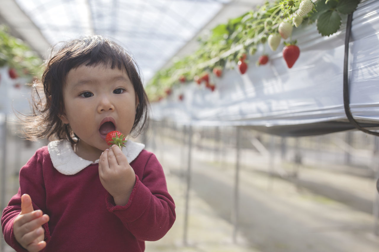 Baby Babygirl Child Childhood Children Only Close-up Day Eating Flavored Ice Food And Drink Freshness Healthy Eating Holding Human Body Part Human Hand Japan One Girl Only Outdoors People Strawberry Sunlight